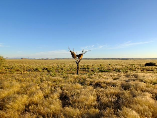 Das nest des vogels, sossusvlei, namibia