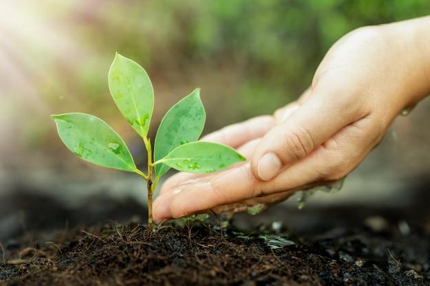 Das neue leben des jungen pflanzensämlings wächst auf schwarzem boden