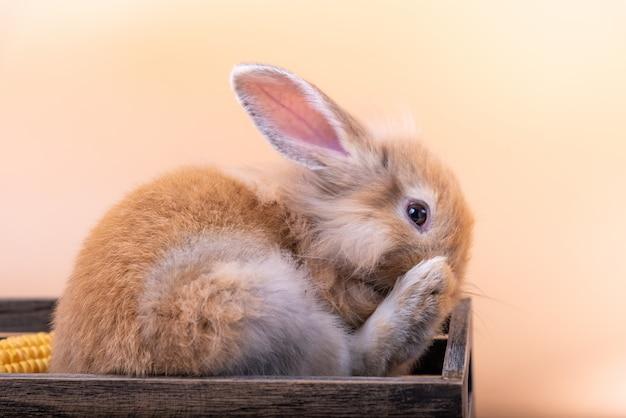 Das niedliche kleine kaninchen neugeborene hat spitze ohren.