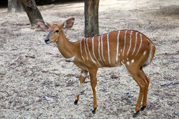 Das nyala-baby bleibt im garten