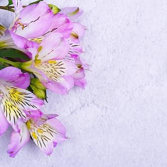 Das orchideenbouquet ist schön, frisch, hellflieder auf hellem hintergrund. die blüten sind groß, saftig und duftend. layout für einen gruß oder eine grußkarte.