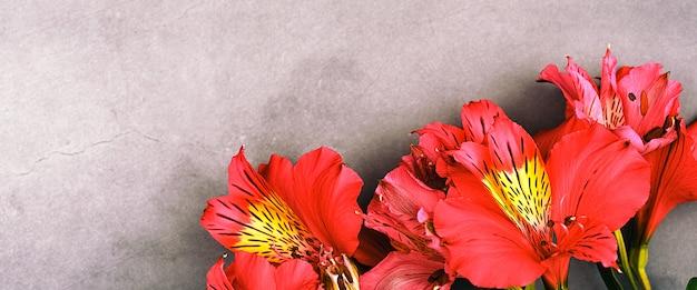 Das orchideenbouquet ist schön, frisch, leuchtend rot auf grauem hintergrund. die blüten sind groß, saftig und duftend. layout für einen gruß oder eine grußkarte.