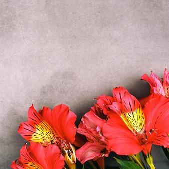 Das orchideenbouquet ist schön, frisch, leuchtend rot auf grauem hintergrund.