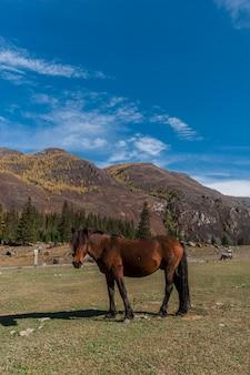 Das pferd auf dem hintergrund des bergigen geländes