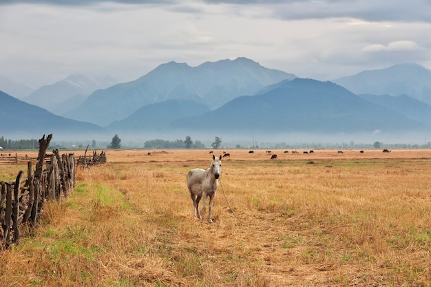 Das pferd in den kaukasischen bergen, aserbaidschan