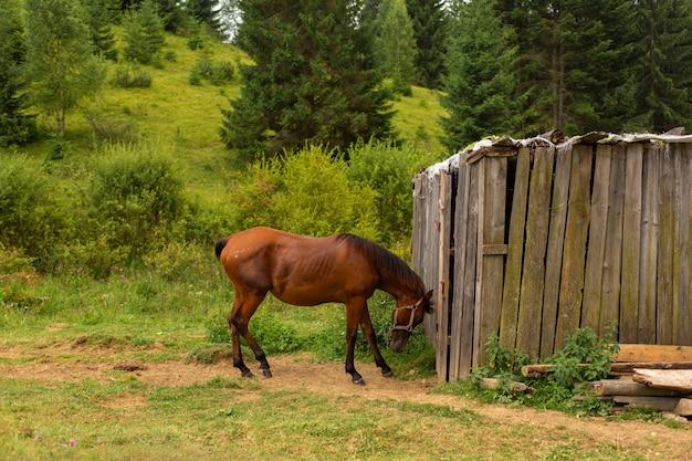 Das pferd weidet neben einer holznuss. grüne natur ländliche landschaft.