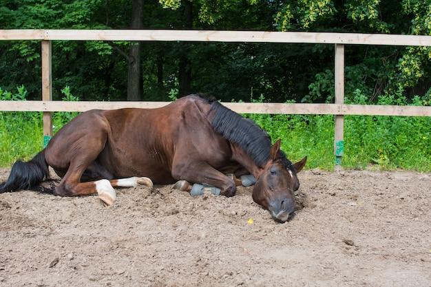 Das pferd weidet und läuft an einem sommertag im fahrerlager