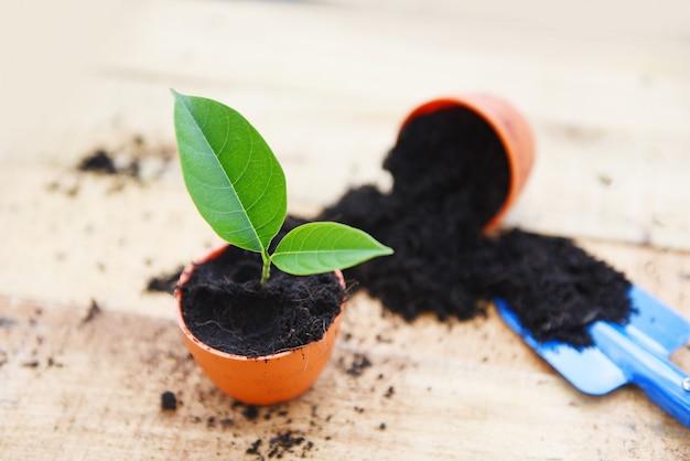 Das pflanzen blüht im topf mit boden auf hölzernen hintergrundarbeiten des pflänzchens der gartengeräte