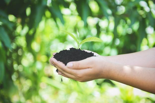Das pflanzen einer jungpflanze der baumsämlinge wachsen auf der frauenholding des bodens in der hand helfen der umwelt.