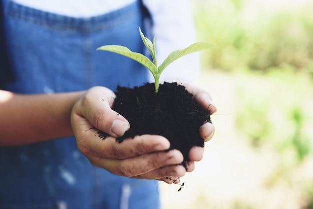 Das pflanzen einer jungpflanze der baumsämlinge wächst auf boden im topf, der eigenhändig frauenhilfe die umwelt hält.