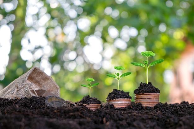 Das pflanzen und entwickeln von bäumen auf münzhaufen sowie der grüne naturhintergrund verwischen das konzept des finanz- und wirtschaftswachstums.