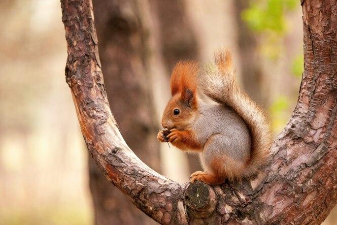 eichhörnchen auf dem baum  premiumfoto