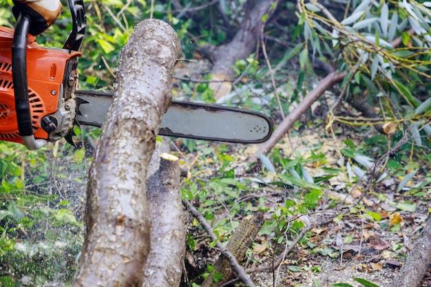 Das sägen eines baumes mit einer kettensäge brach den stammbaum nach einem hurrikan