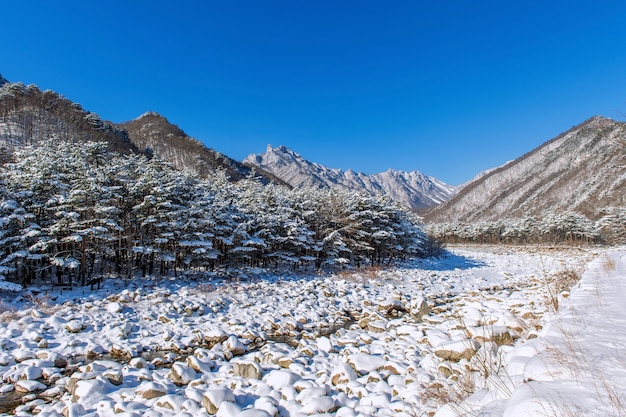 Das seoraksan-gebirge ist im winter in südkorea schneebedeckt