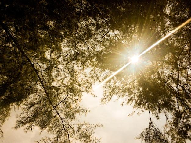 Das sonnenlicht durch die ranches eines überdachten
