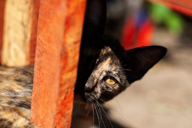 Das streunende kätzchen ist schwarz unter dem kaputten tisch und betrachtet die kamera in der morgensonne.