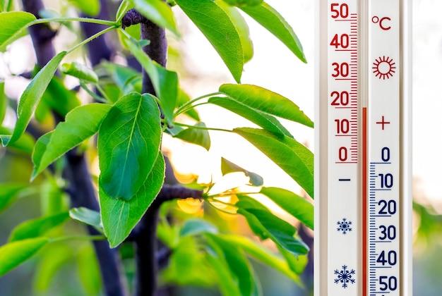 Das thermometer an den birnenblättern zeigt eine temperatur von plus 20 grad an Premium Fotos