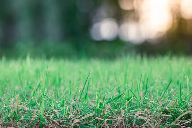 Das unscharfe hintergrund bokeh des grünen grases