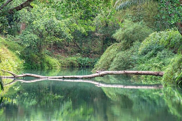 Das wasser im bach ist grün und hellgrüner baum am kapao-wasserfall-nationalpark