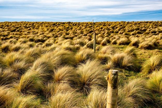 Das windgepeitschte gelände am slope point, dem südlichsten punkt neuseelands, wo nur büschelgras zu überleben scheint