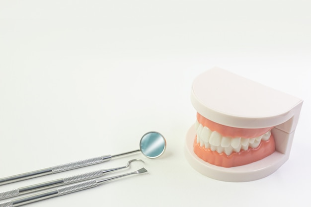 Das zahnmodell auf weißem hintergrund für zahnmedizinischen inhalt.
