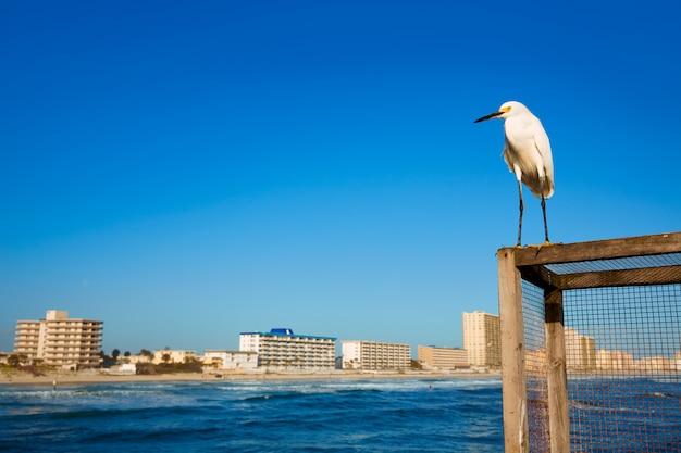 Daytona beach in florida vom pier us