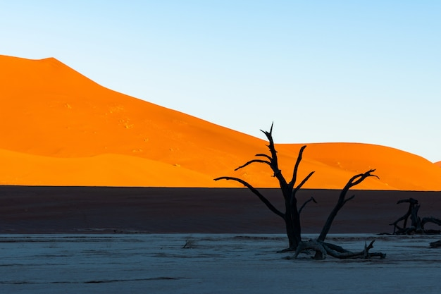 Deadvlei im namib-naukluft-nationalpark sossusvlei in namibia - tote kameldornbäume gegen orange sanddünen mit blauem himmel.