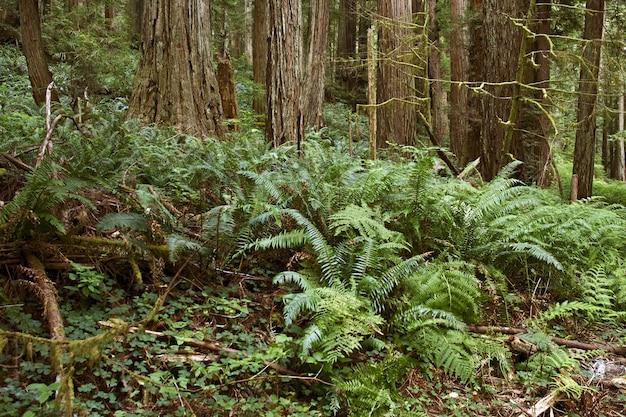 Deep forest mit farnen