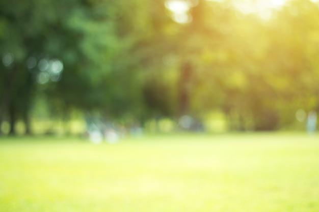 Defocused bokeh hintergrund des gartens mit blühenden bäumen am sonnigen tag, hintergrund, sommerzeit