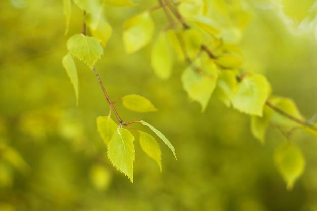 Defocused natürlicher herbstwaldhintergrund am sonnigen tag