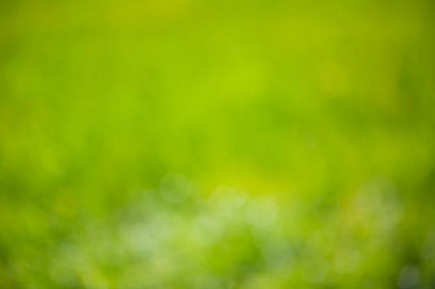 Defocused unscharfer naturgrünhintergrund mit weichem bokeh beleuchtet.