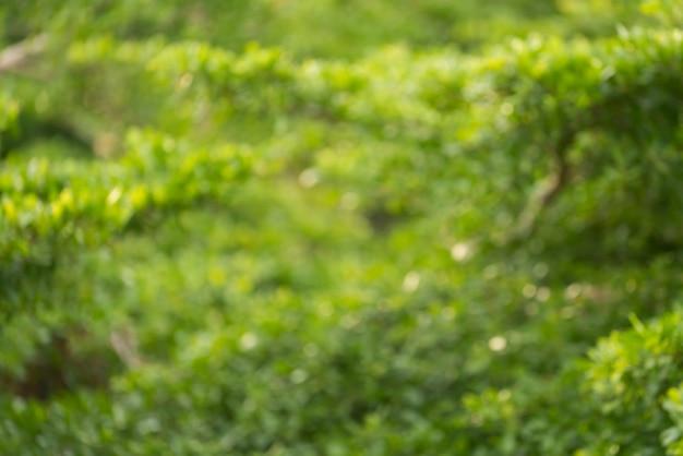 Defokussierter grüner blatthintergrund