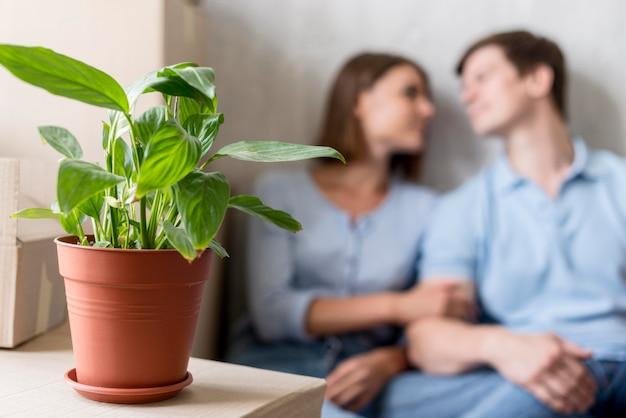 Defokussiertes paar macht eine pause vom packen, um sich mit der pflanze zu bewegen