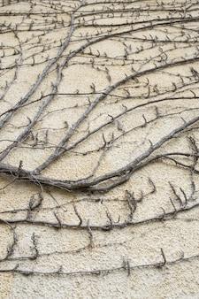Dekoration der alten wilden trockenen anlage der straße.