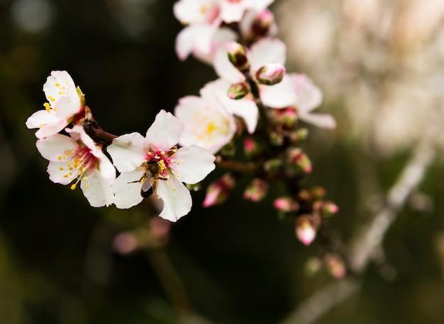 Dekoration der weißen blüte im freien