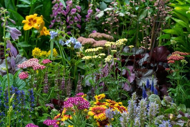 Dekorative blumen und pflanzen im garten
