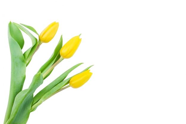 Dekorative gelbe tulpen mit leerzeichen