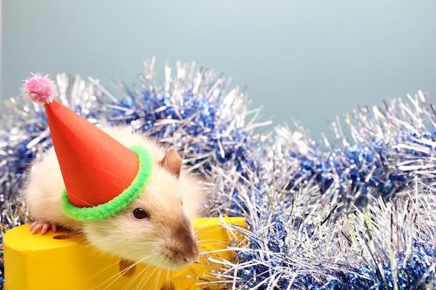 Dekorative ratte in einem weihnachtshut- und -spielzeugkäse. die ratte ist ein symbol des neuen jahres