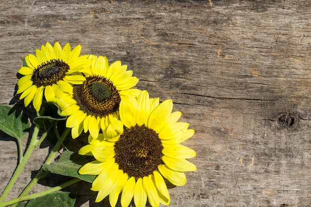 Dekorative sonnenblumen auf dem holzhintergrund