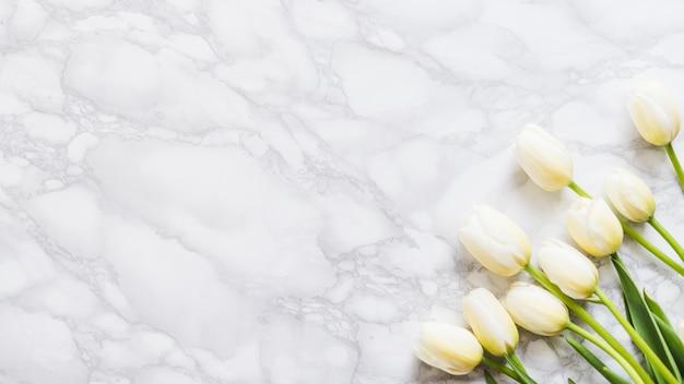 Dekorative tulpenblumen auf einem bunten hintergrund