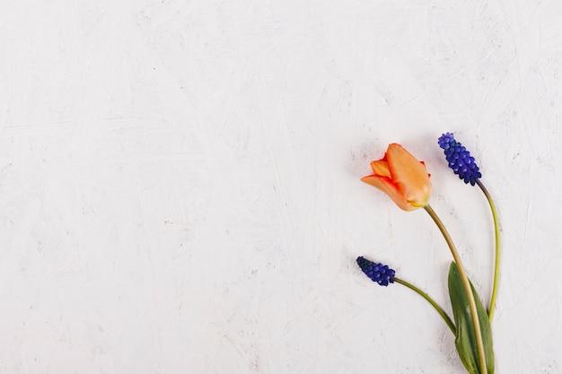 Dekorative tulpenblumen