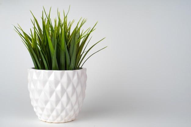 Dekorativer grasbaum gepflanzt weißen keramiktopf isoliert.