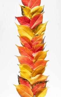 Dekorativer herbstrand oder seitenteiler aus herbstorangenblättern.