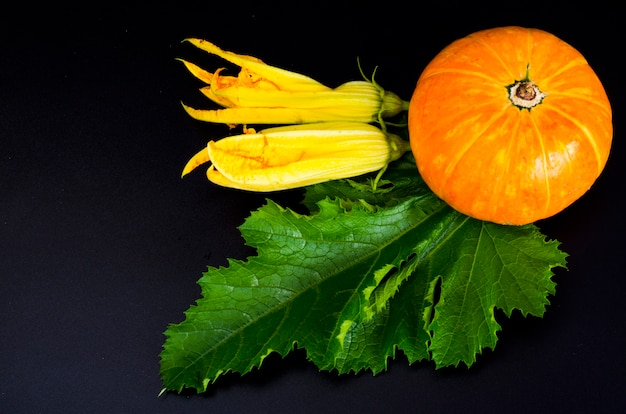 Dekorativer kleiner orange kürbis auf schwarzem hintergrund.