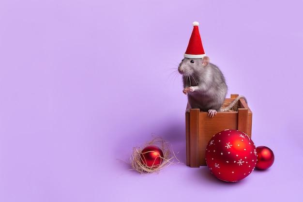 Dekorativer ratten-dumbo in einer weihnachtsmannmütze in einer holzkiste. silvester spielzeug. jahr der ratte. chinesisches neujahr. charmantes haustier.