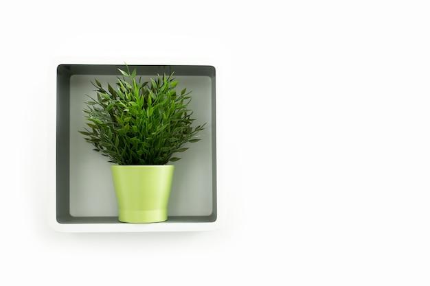 Dekoratives gras im grünen topf auf weißem quadratischem regal. hausdekoration blume an der wand.