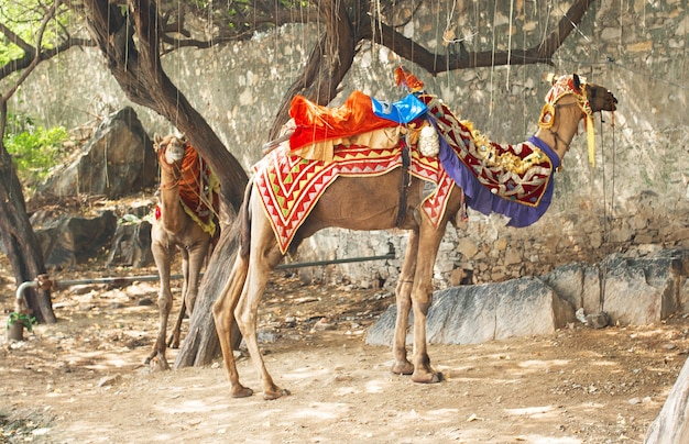 Dekoratives kamel