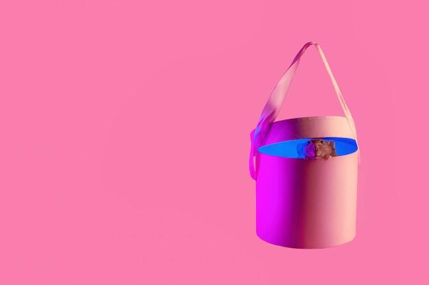 Dekoratives rattensymbol des jahres im neonlicht im geschenk auf rosa