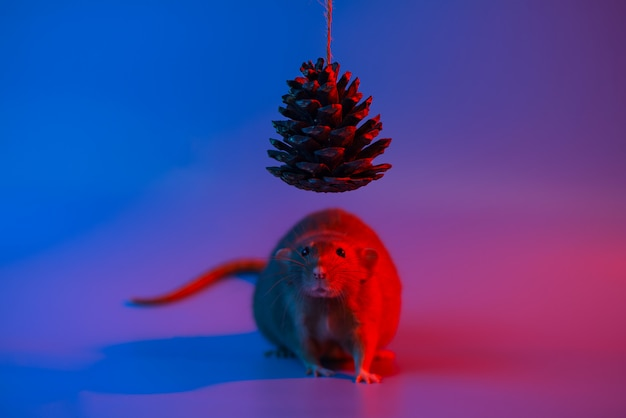 Dekoratives rattensymbol des jahres und der kegel des weihnachtsbaums im blauen neonlicht
