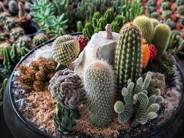Dekorieren sie die wüstenpflanzen in töpfen.